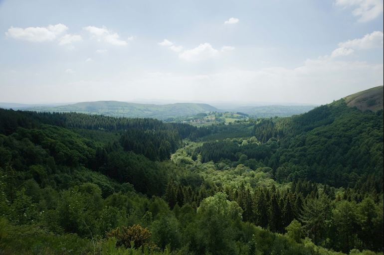 Cwm Rhaeadr Forest towards Mynydd Du in the Brecon Beacons