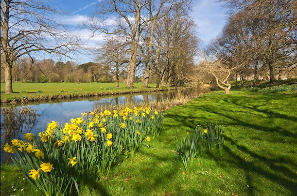 View of the river and daffodils along the taff trail