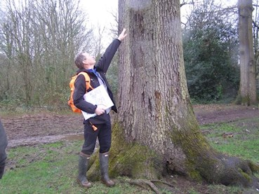 Man checking a tree