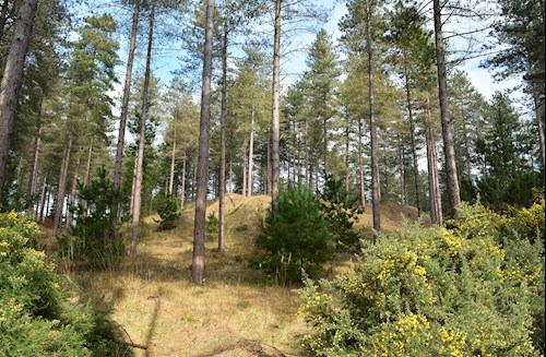 View of Newborough Forest - credit petersrockypics
