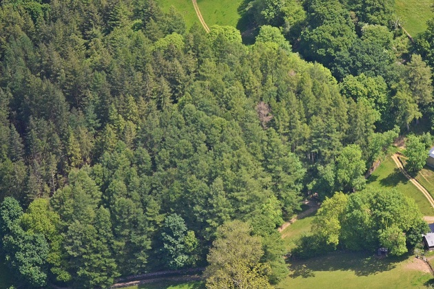Arial view of a group of trees