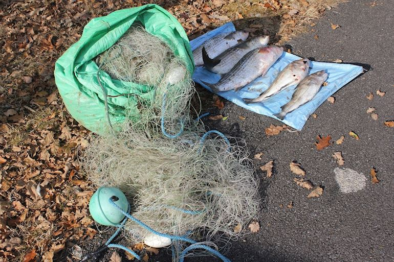 Photo of illegal net on the floor and dead fish next to it