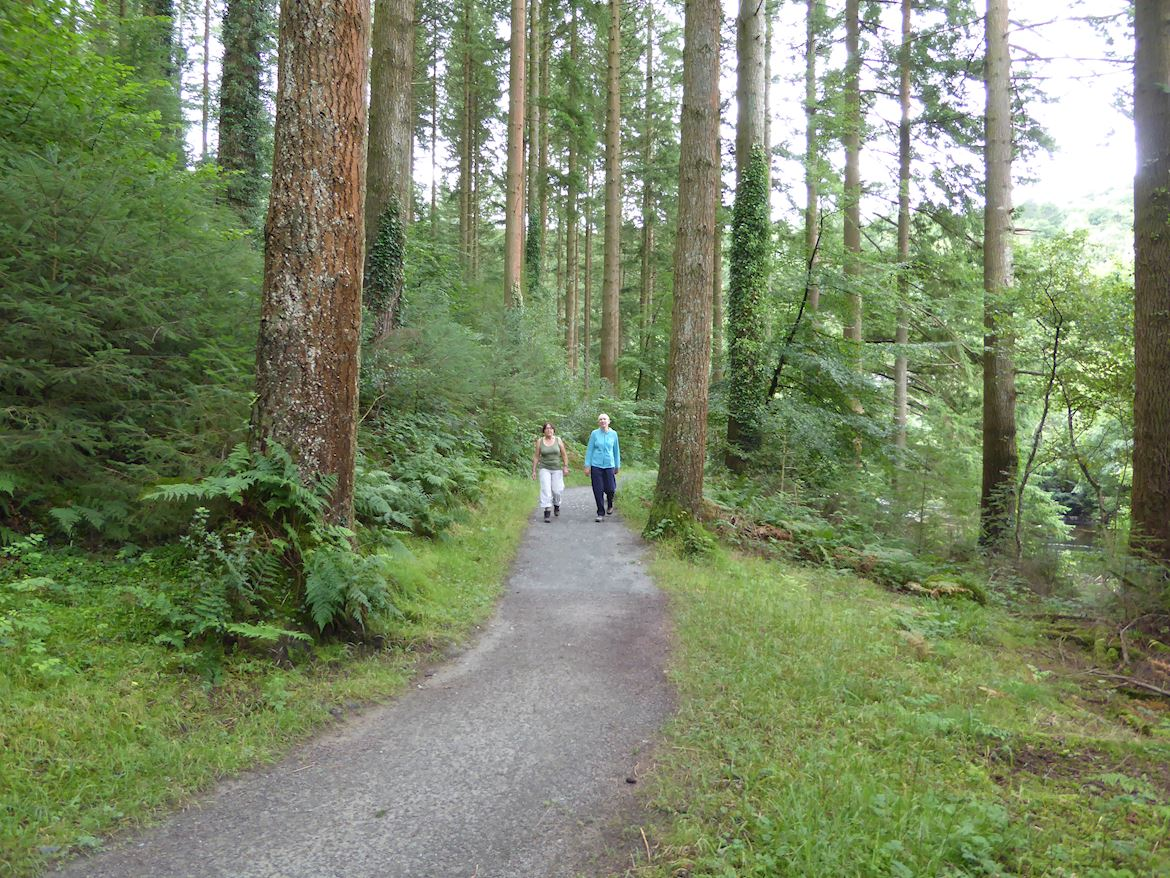 Two people walking the King's Guards Trail at Ty'n y Groes, Coed y Brenin Forest Park