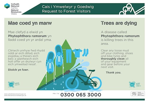 Trees are dying Phytophthora poster 2