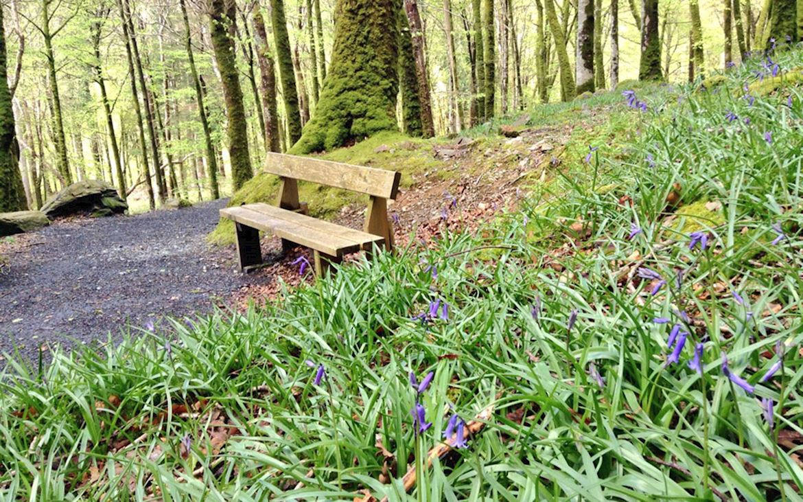Bench and bluebells