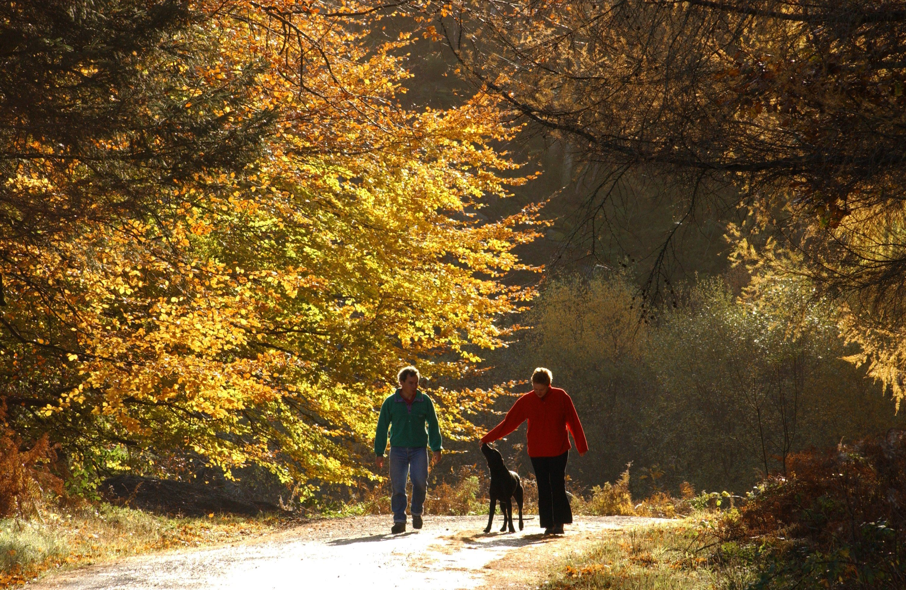A couple with their dog walking along a trail